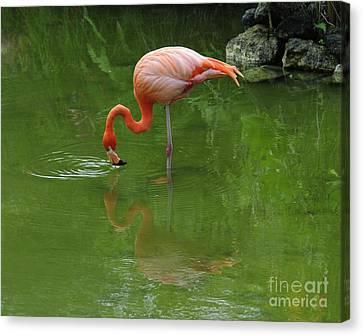 Pink Flamingo Canvas Print by Cindy Lee Longhini