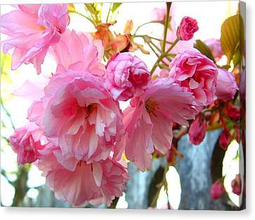 Pink Flowers Canvas Print by D R TeesT