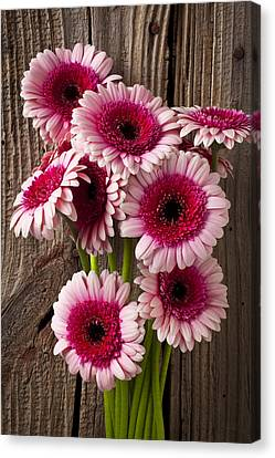 Pink Gerbera Daisies Canvas Print by Garry Gay