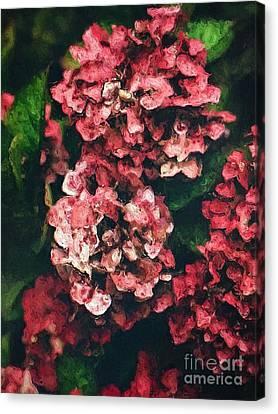 Pink Hydrangeas Canvas Print by Amy Cicconi