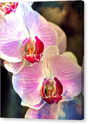 Pink In A Row Canvas Print by Marty Koch