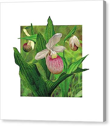 Pink Lady Slipper Canvas Print by JQ Licensing