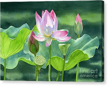 Pink Lotus Blossom  Buds And Seed Pods Canvas Print by Sharon Freeman