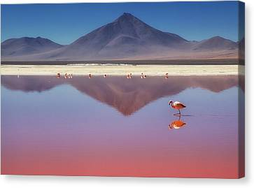 Pink Morning Canvas Print by Margarita Chernilova