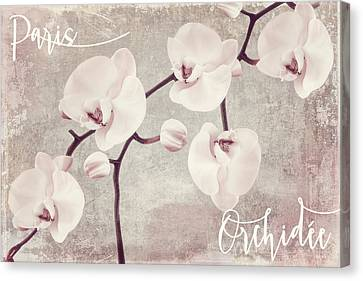 Pink Orchids Canvas Print by Mindy Sommers