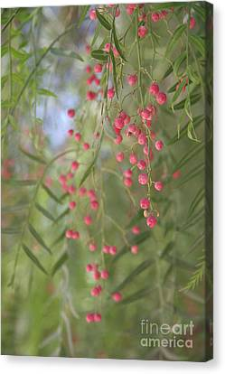 Pink Pepper  Canvas Print by Clay Cofer