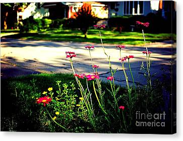 Pink Petals In The Sunlight Canvas Print by Frank J Casella