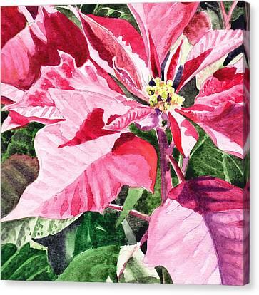 Pink Poinsettia Plant Canvas Print by Irina Sztukowski