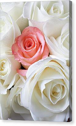 Pink Rose Among White Roses Canvas Print by Garry Gay