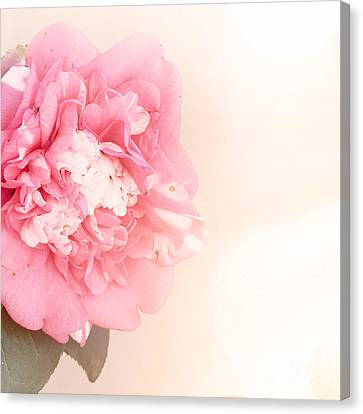 Pink Ruffled Camellia Canvas Print by Cindy Garber Iverson