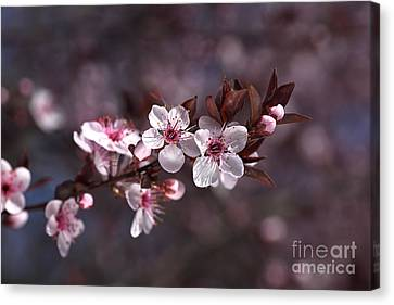 Pink Spring Blossom Canvas Print by Joy Watson