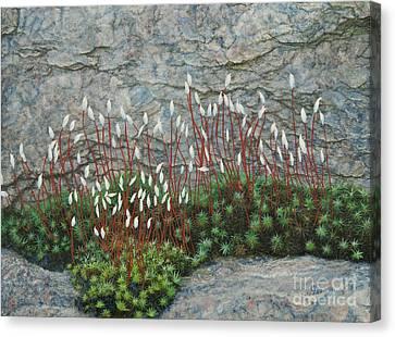 Pink Stony Creek Granite Still Life Study Canvas Print by Cindy Lee Longhini