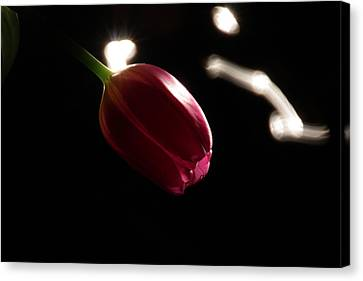 Pink Tulip Canvas Print by Couragesings Photography
