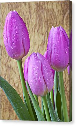Pink Tulips Canvas Print by Garry Gay