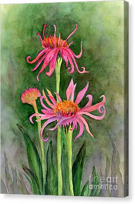 Pink Tutus - Cone Flowers Canvas Print by Amy Kirkpatrick