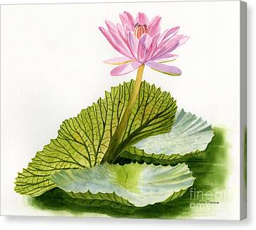 Pink Water Lily With Textured Pads Canvas Print by Sharon Freeman