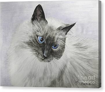 Pip Canvas Print by Mary Rogers
