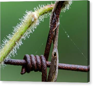 Plant And Fence Canvas Print by Don L Williams