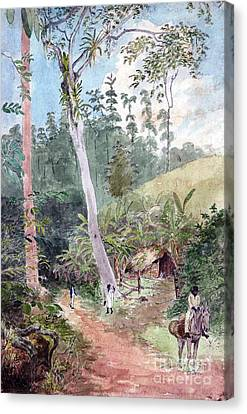 Plantain Walk - Jamica Canvas Print by Pg Reproductions