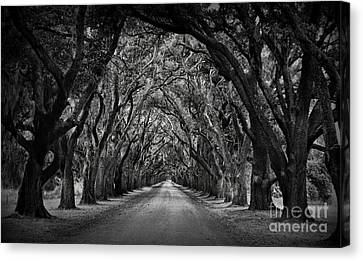 Plantation Oak Alley Canvas Print by Perry Webster