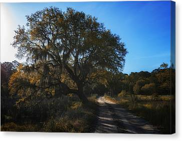 Plantation Road Canvas Print by Rick Berk