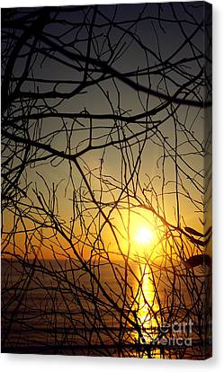Plants On Sunset Canvas Print by Carlos Caetano