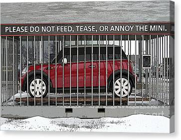 Please Do Not Feed Tease Or Annoy The Mini Canvas Print by Teresa Zieba