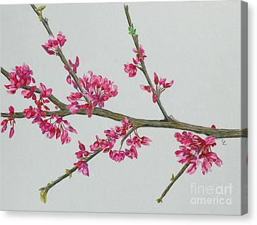 Plum Blossom Canvas Print by Glenda Zuckerman