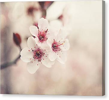 Plum Blossoms Canvas Print by Lisa Russo