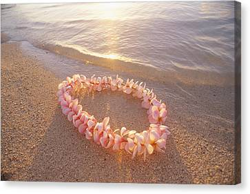 Plumeria Lei Shoreline Canvas Print by Mary Van de Ven - Printscapes