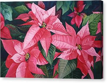 Poinsettia Trio Canvas Print by Tina  Sander
