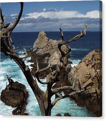 Point Lobos Rocks And Branches Canvas Print by Charlene Mitchell
