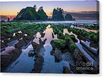 Point Of The Arches Canvas Print by Inge Johnsson