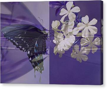 Polar Attraction Canvas Print by Rose  Hill