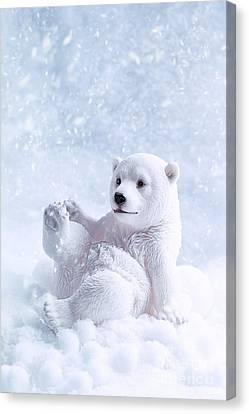 Polar Bear Figure Canvas Print by Amanda And Christopher Elwell