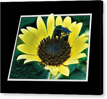 Pollinate Canvas Print by Woctxphotog
