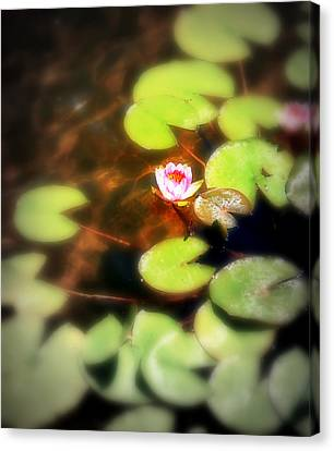 Pond Flower Canvas Print by Perry Webster