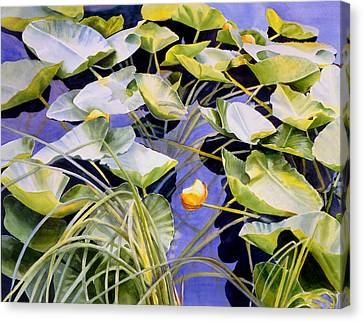Pond Lilies Canvas Print by Sharon Freeman