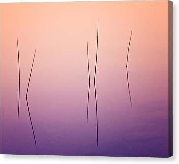 Pond Reeds - Abstract Canvas Print by Thomas Schoeller