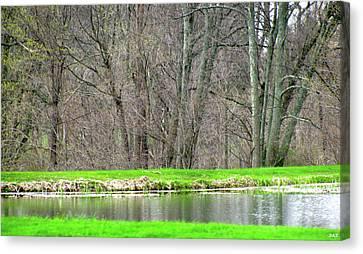 Pond Starts To Grow Canvas Print by Debra     Vatalaro