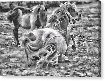 Ponies Canvas Print by Contemporary  Art