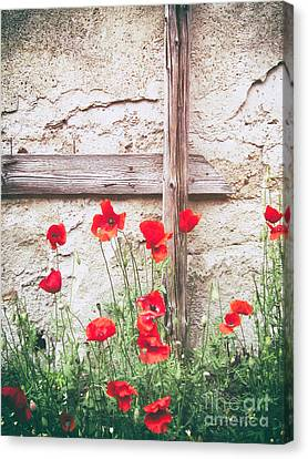 Poppies Against Wall Canvas Print by Silvia Ganora