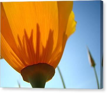 Poppies Sunlit Poppy Flower 1 Wildflower Art Prints Canvas Print by Baslee Troutman
