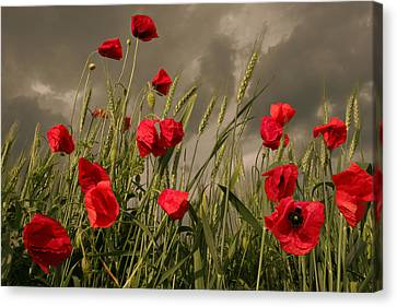 Poppy Field Before The Storm Canvas Print by Floriana Barbu