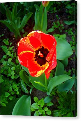 Flowers Canvas Print featuring the photograph Poppy by Roberto Alamino