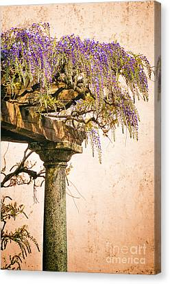 Porch With Wisteria Canvas Print by Silvia Ganora