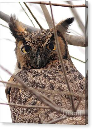 Portrait Of A Great Horned Owl Canvas Print by Wingsdomain Art and Photography