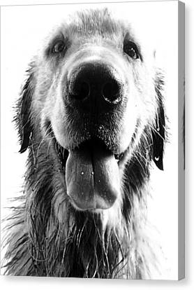 Portrait Of A Happy Dog Canvas Print by Osvaldo Hamer