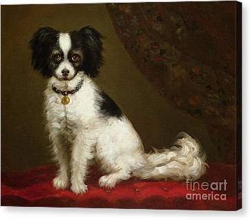 Portrait Of A Spaniel Canvas Print by Anonymous