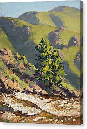 Poudre Rapids Canvas Print by Mary Giacomini